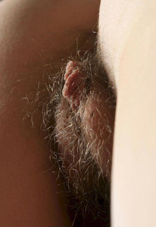 Волосатые вагины тёлок крупным планом секс фото и порно фото